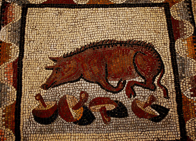Truffe_pig_ancient_Roma